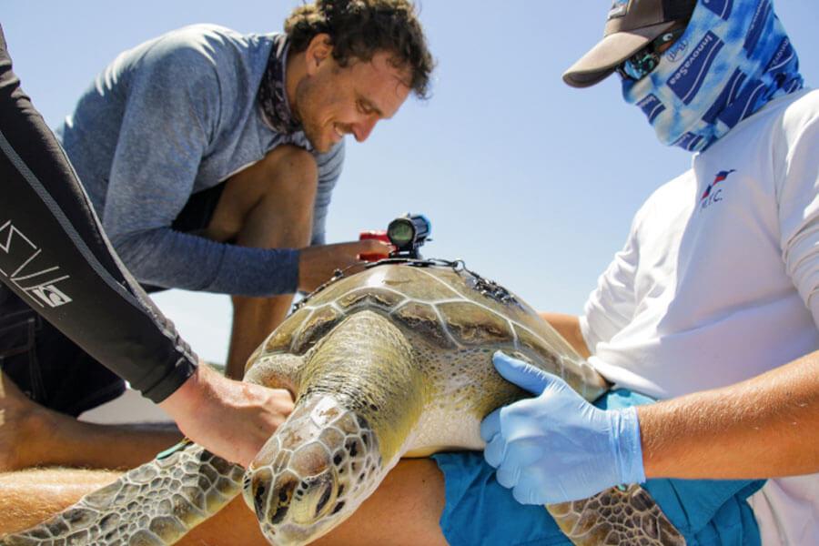 Contribuez à sauver les océans avec la Vaquita de Paralenz